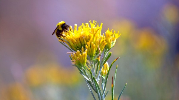 Bee-On-A-Yellow-Flower-1080x1920