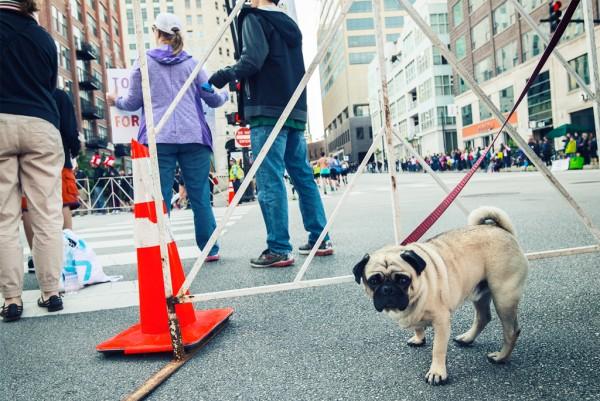 Marathon-Dogs-(2-van-12)
