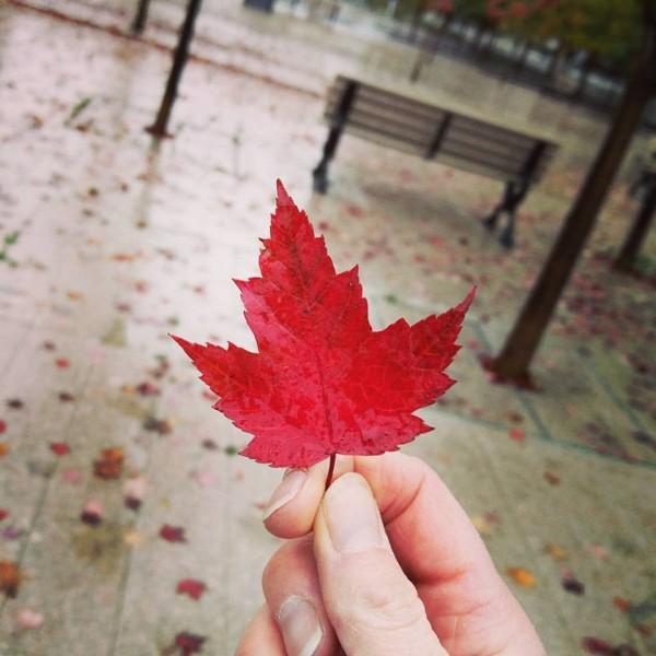 Canada Toronto Airbnb